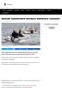 Båtfolk frykter flere uerfarne båtførere i sommer